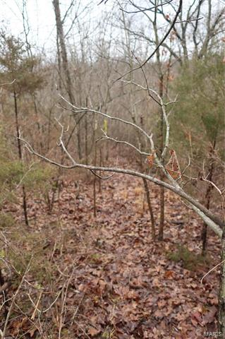 0 9.04 Acres - Dittmer  Road -14